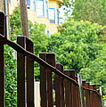 Iron Fence 2 by Janette Legg