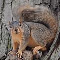 Irritated Squirrel by Belinda Stucki