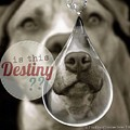 Is This Destiny by Kathy Tarochione