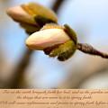 Isaiah 61  V 11 by Debbie Nobile
