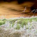 Island Dune by Peter  McIntosh
