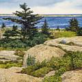 Island Harebells by Tom Wooldridge