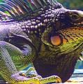 Island Iguana by Caroline  Urbania Naeem