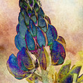 Island Lupin 2 by WB Johnston