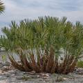 Island Palms by Dale Powell