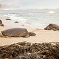 Island Rest by Heather Applegate
