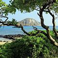 Island Through The Trees by Jennifer Robin