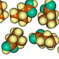 Isovaleric Acid Molecular Models by Scimat