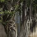 Israel, Tree Trunk by Keenpress