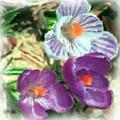 Ist Flowers In The Garden 2010 by David Lane