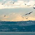Istanbul, Morning by Chris Patel