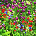 It Takes A Mix To Make A Garden by Paul W Sharpe Aka Wizard of Wonders
