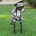 Italian Greyhound Army by Janie Norris