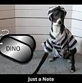 Italian Greyhound Bad Boy by Janie Norris