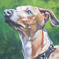 Italian Greyhound by Lee Ann Shepard