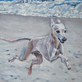 Italian Greyhound On The Beach by Lee Ann Shepard