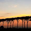 Italian Sunshine - Sunset On Italian Landscape, Pines - The Roman And Italian Landscape, Rome, Italy by Alessandro Nesci