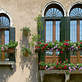 Italian Windows by Julie Geiss
