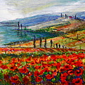 Italy Tuscan Poppies by Yvonne Ayoub
