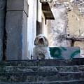 Italy's Capri Doggie by Mindy Newman