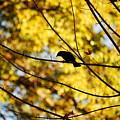 It's A Bird by Lori Tambakis