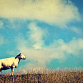 It's A Sheep by Angela Doelling AD DESIGN Photo and PhotoArt