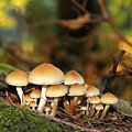It's A Small World Mushrooms by Jennie Marie Schell