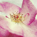 Its Beauty by Angela Doelling AD DESIGN Photo and PhotoArt