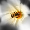 Its Good To Bee Me by Susan Moore