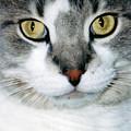 It's In The Cat Eyes by Corinne Elizabeth Cowherd