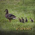 Its Spring by Mykel Davis