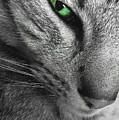 I've Got My Eye On You.  by Jenny Revitz Soper
