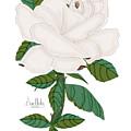 Ivory Rose by Anne Norskog