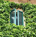 Ivy Shutters by Ron Koivisto