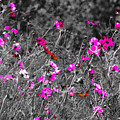 Wild Flowers by Fred  Boehm