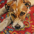 Jack Russell by Cheryl Pass
