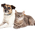 Jack Russell Terrier Dog And Tabby Cat by Susan Schmitz