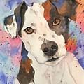 Jack Russell Terrier by Jackie Calderone