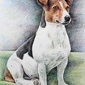 Jack Russell Terrier by Nicole Zeug