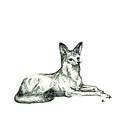 Jackal Sketch by Shirley Heyn