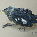 Jackdaw Baby by Dag Peterson