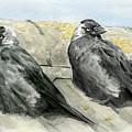 Jackdaws In The Sun by Chris Pendleton