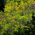 Jackson County Wildflowers by George Ferrell