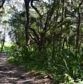Jackson's Gap Trail by Warren Thompson