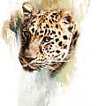 Jaguar Abstract by Pam  Holdsworth