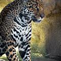 Jaguar At Rest by Steven Jones