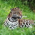 Jaguar by Ellen Henneke