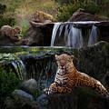 Jaguar Falls by Melinda Hughes-Berland
