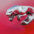 Jaguar Hood Ornament by Gaetano Chieffo