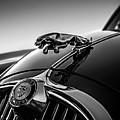 Jaguar Mascot by Douglas Pittman